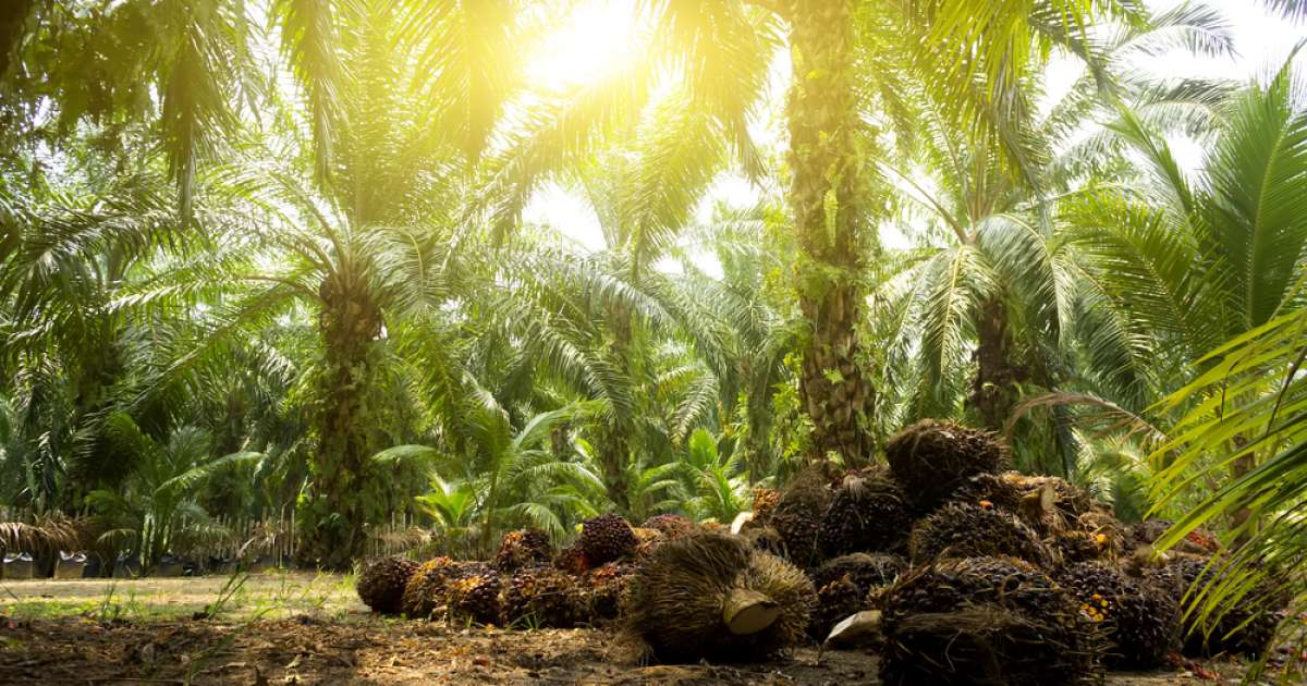 Photo of Equatorial Palm Oil rises as market applauds non-exec appointment to board