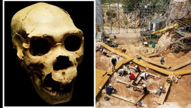 Photo of Archaeology news: 'Fascinating' theory Neanderthals survived winters by hibernating