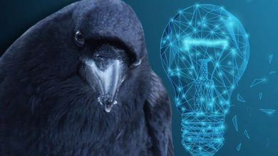 Photo of Animal intelligence breakthrough: Ravens as smart as great apes in 'surprising' new study