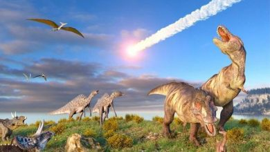 Photo of What killed the dinosaurs? Harvard astronomers revisit asteroid theory